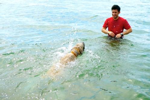 Lake Ontario, Wheaten Swimming, Wheaten Terrier
