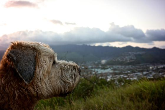 Hawaii life, living in hawaii, Hanauma Bay, thereafterish, Wheaten Terrier, Sony NEX 5R, Hawaii Sunset
