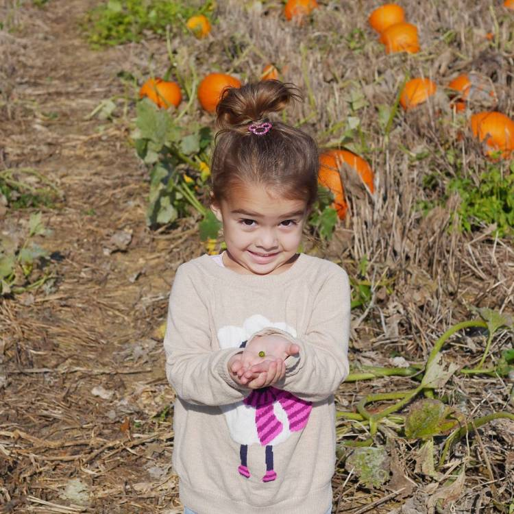 This little girl has the whole familys heart pumpkins hocomdhellip
