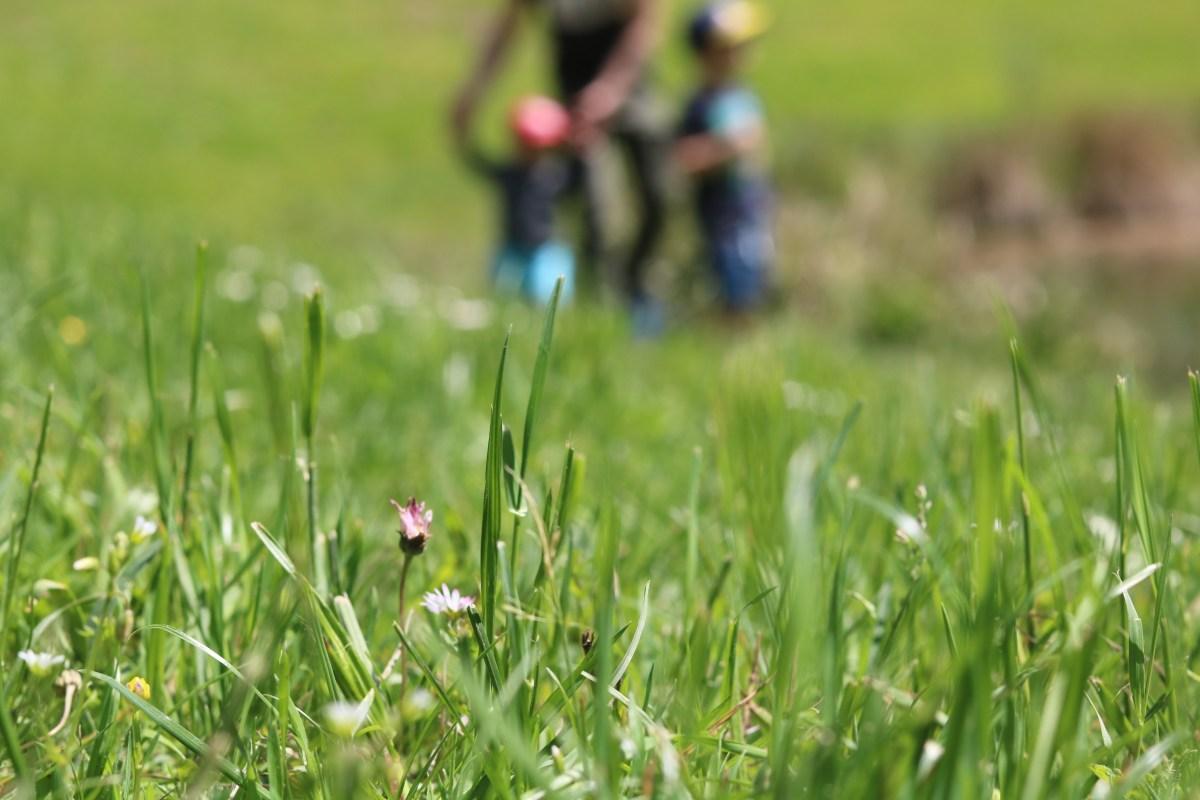 L'arboretum - les petits bonheurs #5