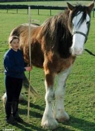 worlds_largest_horse