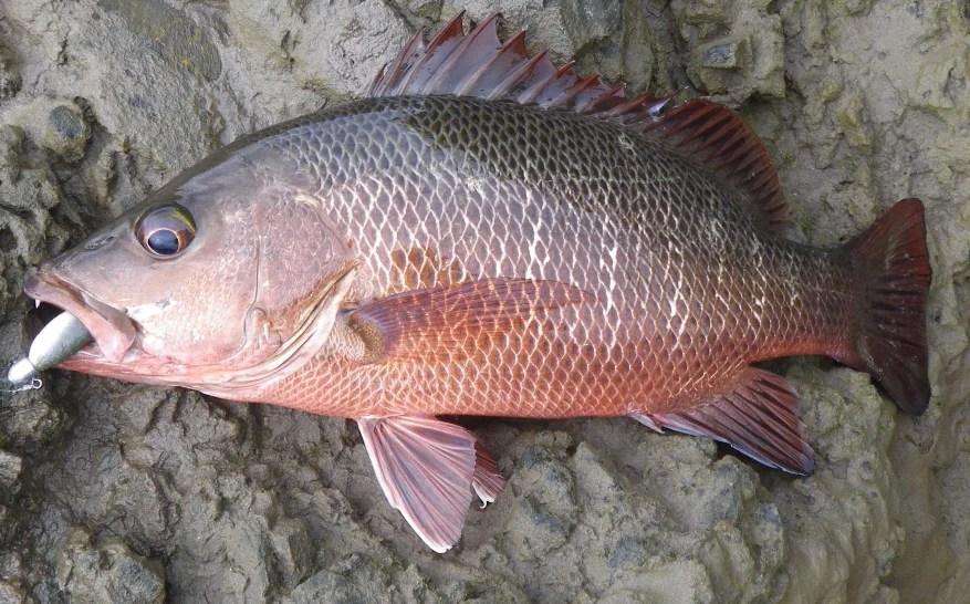 JP Bartholomew catches 8 gamefish on lures in the Umzimkulu