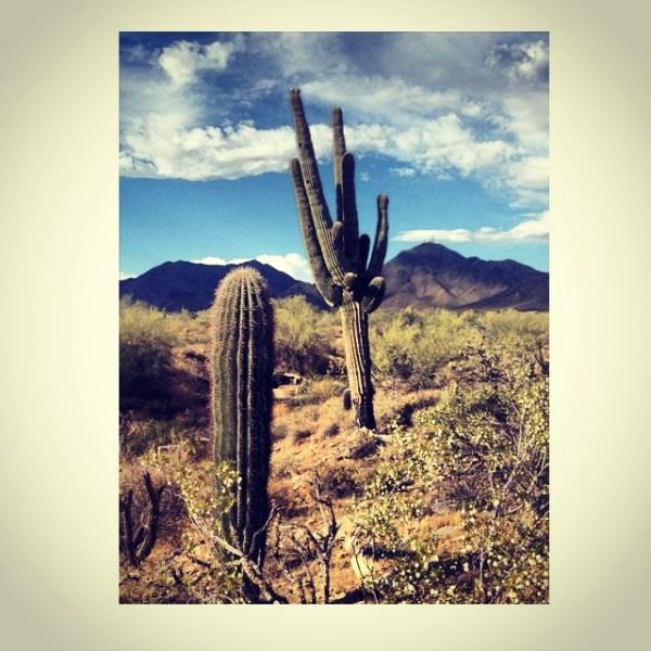img 8216 SOUTHWEST PILGRIMAGE: ARIZONA & NEW MEXICO   The Sche Report / Margaret Sche