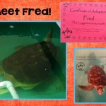 New Class Pet: A Sea Turtle