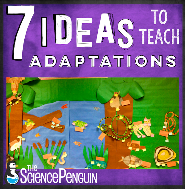 7 Ideas to Teach Animal Adaptations