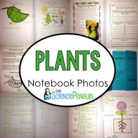 Plants and Photosynthesis Interactive Science Notebook Photos