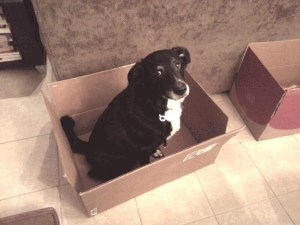 Bella in a Packing Box Ready to Move