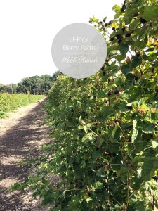 U-Pick Berry Farm | SF Bay Area