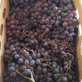 Juniper grapes. Yes, please.
