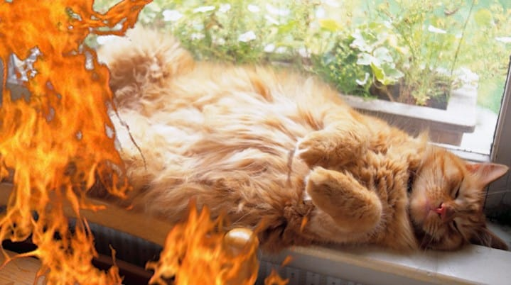 Cat's Meow Doesn't Wake Sleeping Family in Apt. Fire