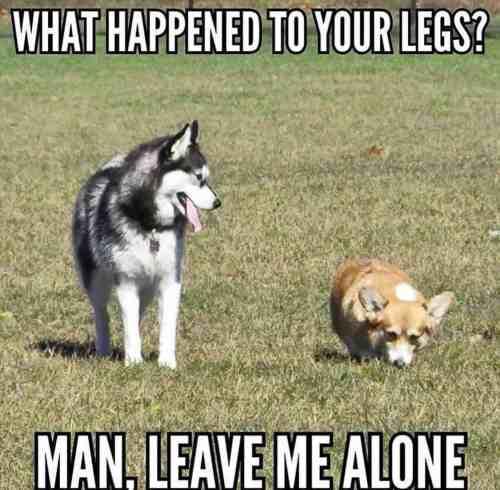 Medium Of Dog Joke Meme
