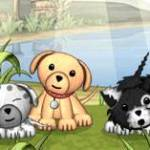 Puppy Sanctuary iPhone Review screenshot