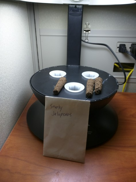 Starting Jalapeno peppers in my AeroGarden 3