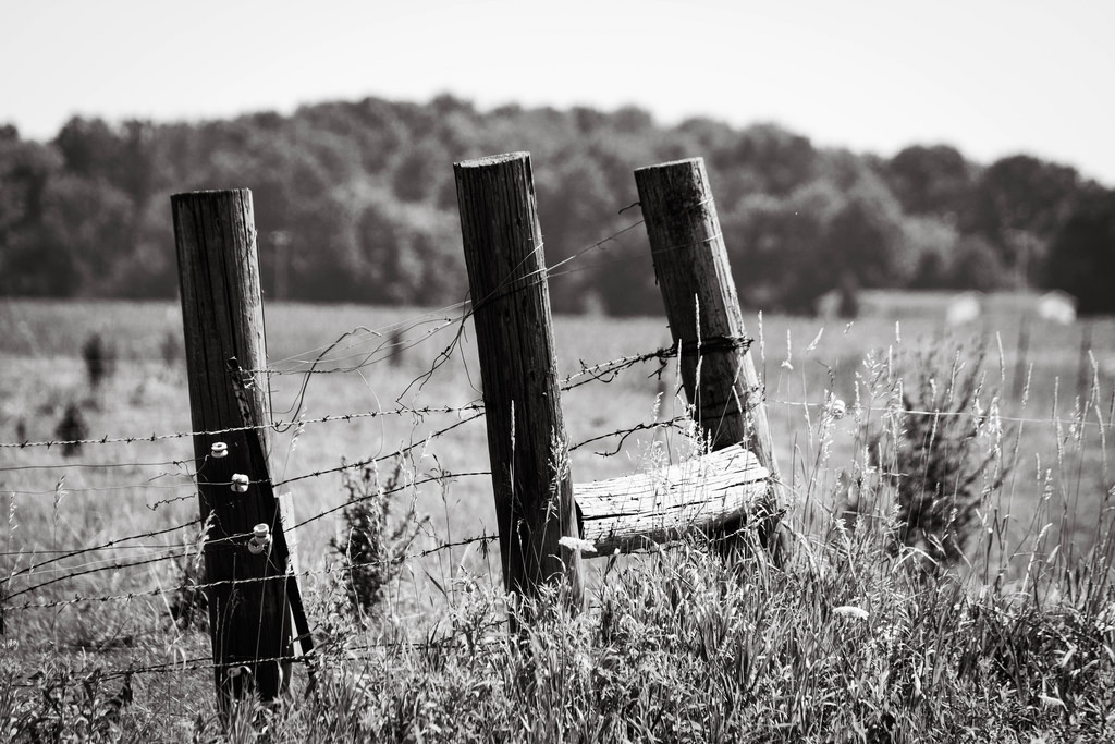 fence-posts-wire