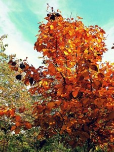 October on the go: fall views