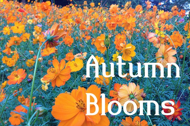 Autumn Flowers are in Bloom!