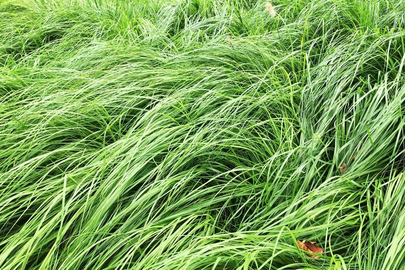 Yeonnam-dong, Seoul, Korea: Grassy Sidewalk Views