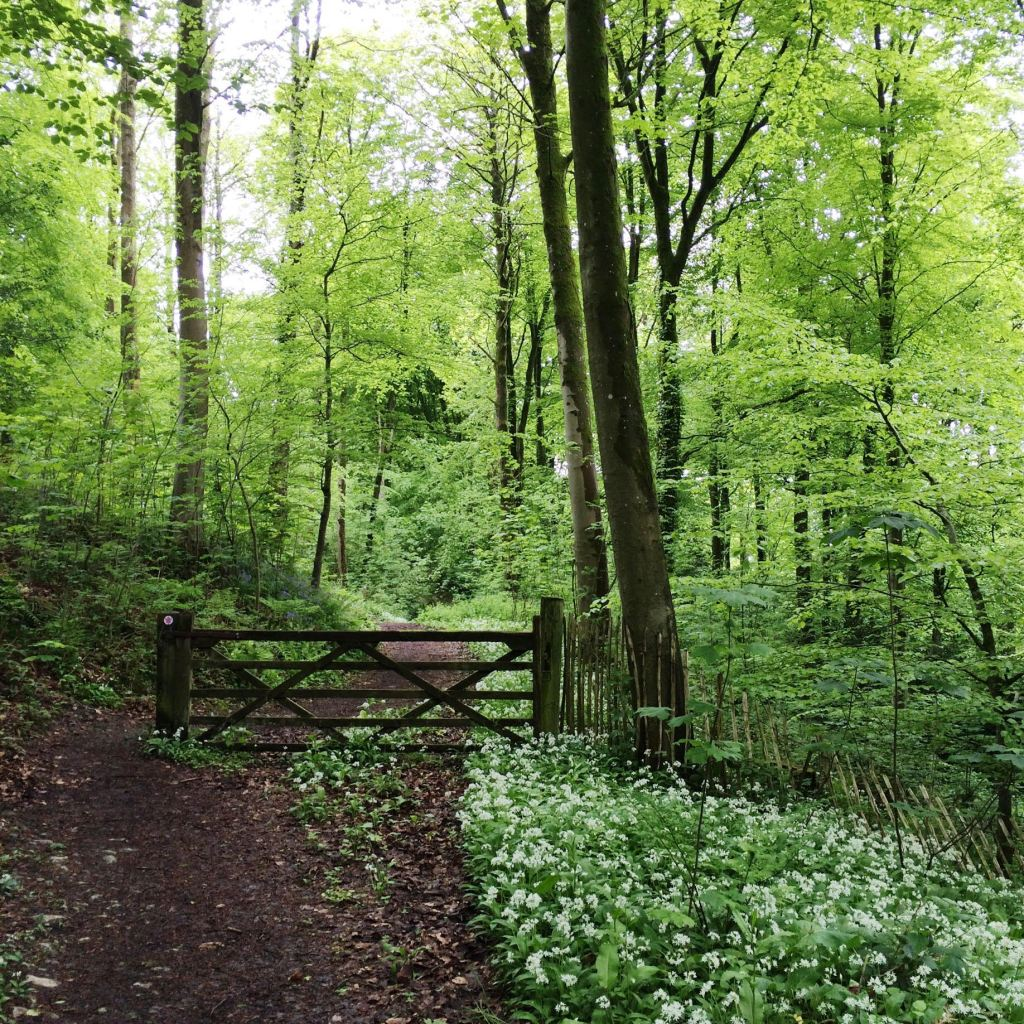 Magical Woodland Walks