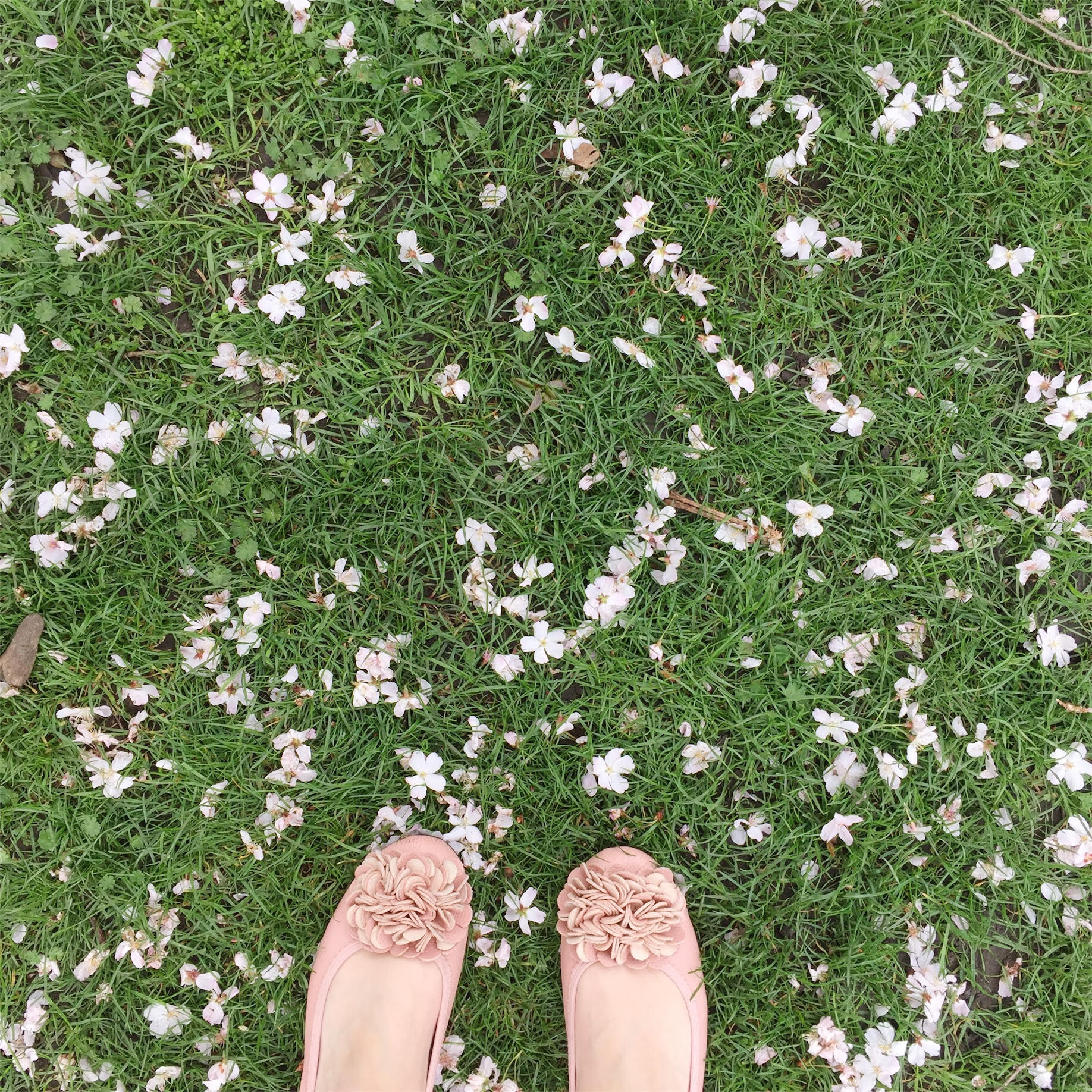 Feet in the flowers, head in the clouds