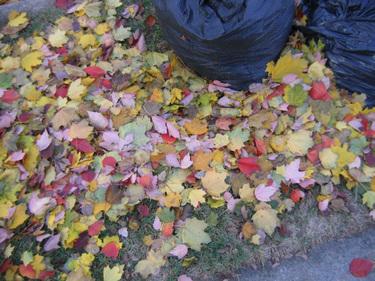 Autumn_001
