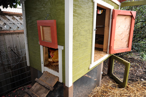 We leave both of them open during the day and although the chickens can jump in and out of the human door they usually prefer to use the chicken door. & Our Urban Chicken Coop Plan \u2013 The Tangled Nest Pezcame.Com