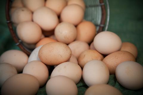 egg480-9613