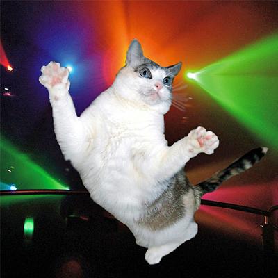 disco cat