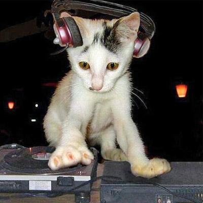 kitten on decks_edited-1