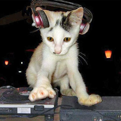 kitten on decks_edited-1