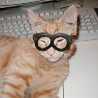 Cat and Eyeglasses