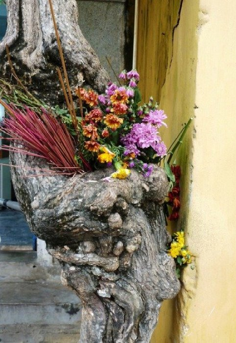 tree-shrine-vietnam
