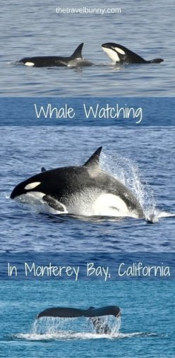 A day of epic sightings on a whale watching trip in Monterey Bay, California
