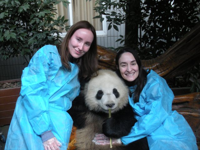 hold a baby giant panda in chengdu china