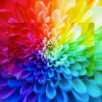 Les couleurs, tout un art... marketing