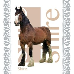Shire T Towel