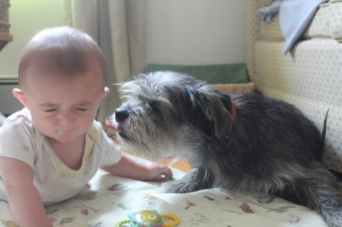 theuglyvolvo dog open letter 4