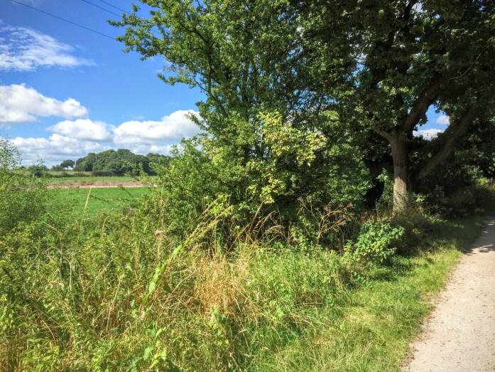 The Wirral Way - Willaston to Gayton
