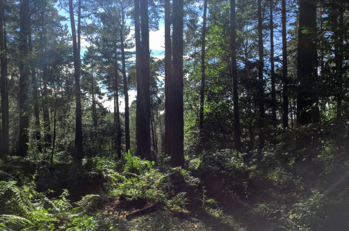 Delamere Forest – Mud and Sunshine