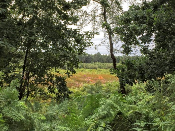 Delamere Forst, Cheshire | The Urban Wanderer | Sarah Irving