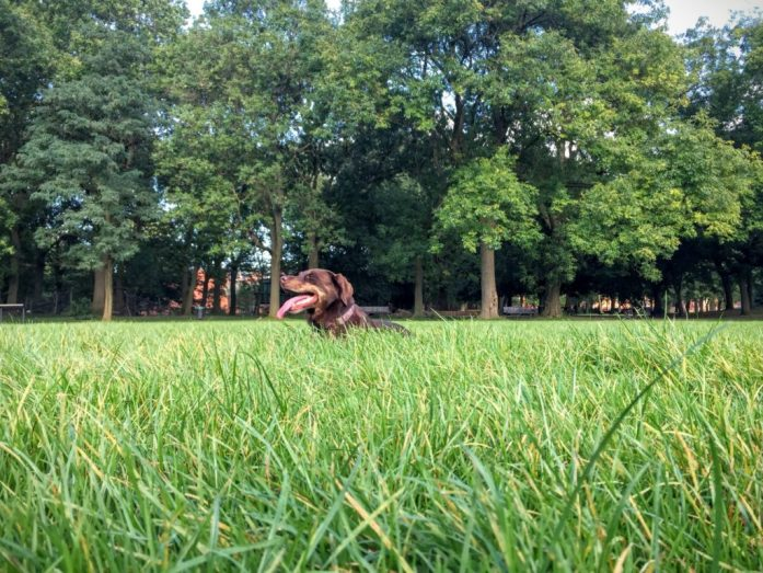 Borrow my Doggy, Whitworth Park, Bridgewater Canal and Ball Throwing | The Urban Wanderer | Sarah Irving | Manchester