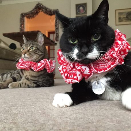 Two of my six kitties celebrating with their Christmas ruffles (that is actually just Annie's expression most of the time!)