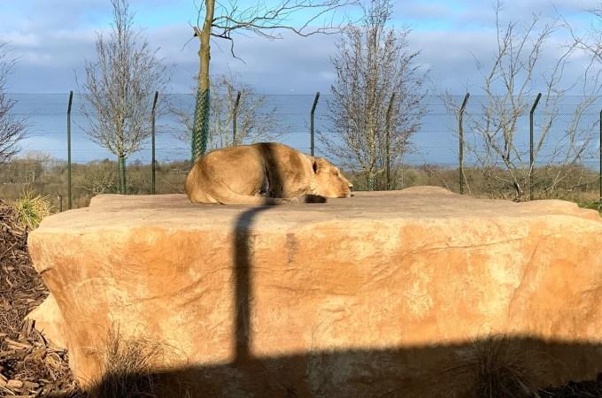 冬季参观切斯特动物园