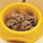 Top 10 Animals Asleep in Food Bowls