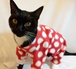 The World's Top 10 Best Images of Cats In Pajamas