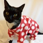 Top 10 Funny Images of Cats In Pajamas