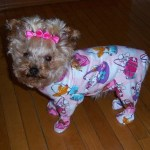 Top 10 Images of Animals In Pajamas