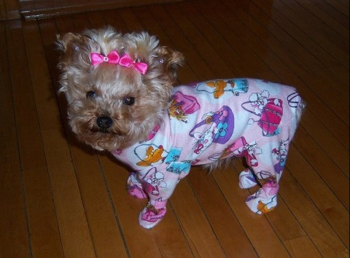The World's Top 10 Best Images of Animals In Pajamas