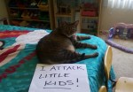 Top 10 Funniest Examples of Cat Shaming
