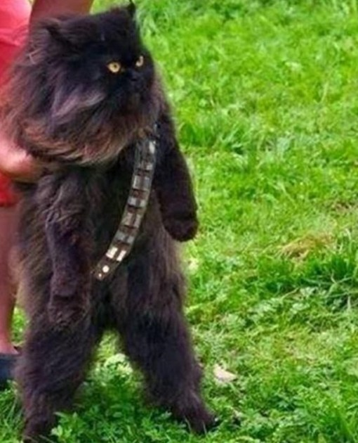 May The Fourth Be With You Wookie: Top 10 Images Of Star Wars Cats