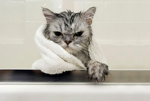 Top 10 Images of Angry Wet Cats